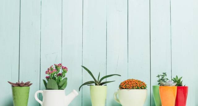 Bring your home to life with house plants