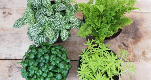 Get closer to nature from the comfort of your own home with an apartment garden
